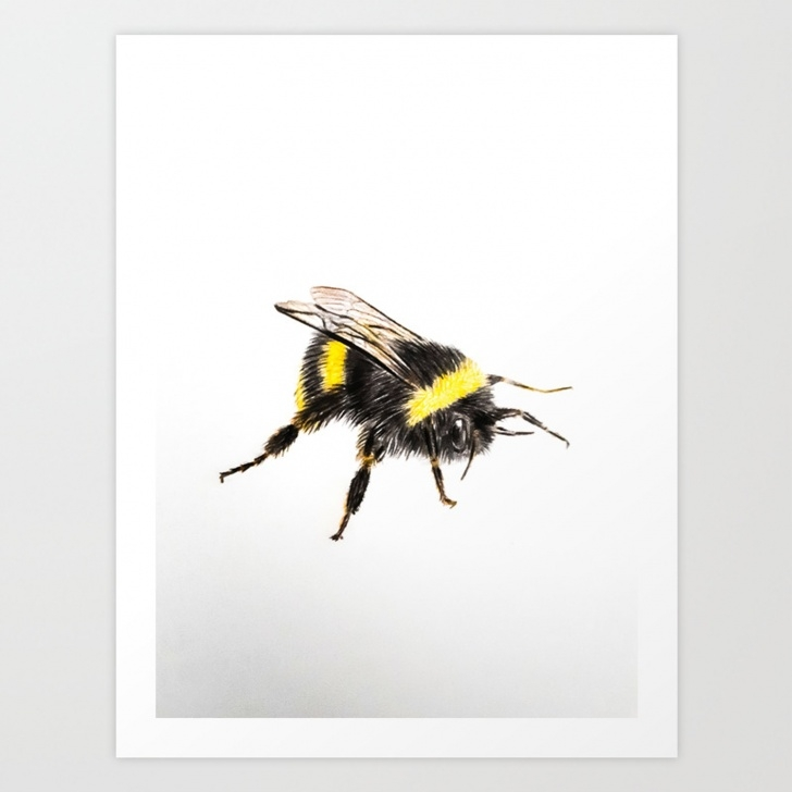 The Most Famous Bee Pencil Drawing Step by Step Colour Pencil Drawing Of A Bee Art Print Images