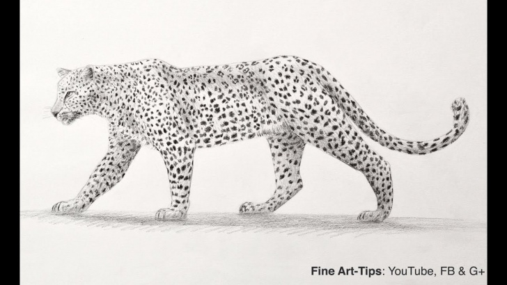 The Most Famous Cheetah Pencil Drawing Tutorials How To Draw A Leopard With Pencil - Big Cat Photos