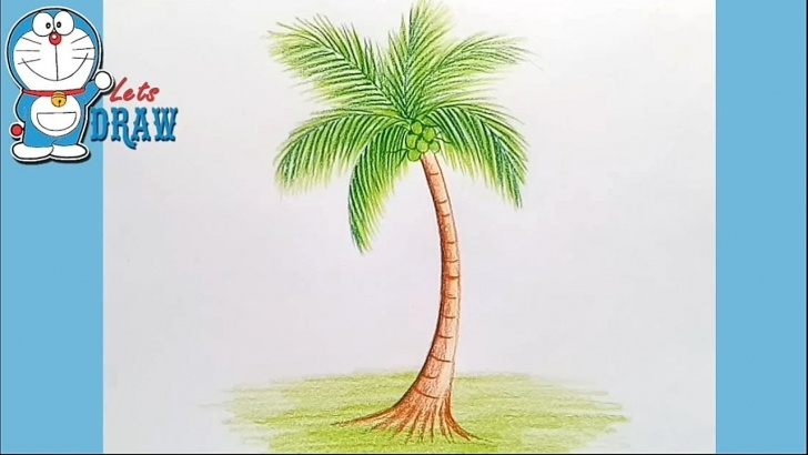 The Most Famous Coconut Tree Pencil Drawing Tutorials How To Draw Coconut Tree Step By Step Pics