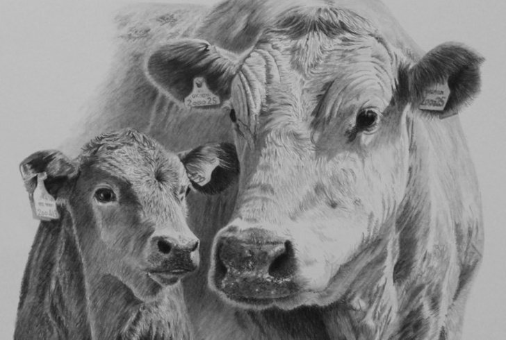 The Most Famous Cow And Calf Pencil Drawing Ideas Cow Head Pencil Drawing Cow Head Penci | Art For Em In 2019 | Cow Images