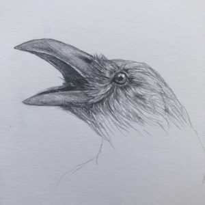 The Most Famous Crow Pencil Sketch Free Ka Ka Crow (Pencil) : Drawing Pictures