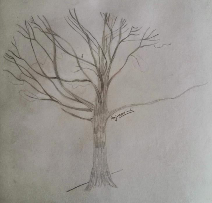 The Most Famous Desert Pencil Drawing Step by Step My Drawings Collection: Desert Tree Pencil Painting Picture