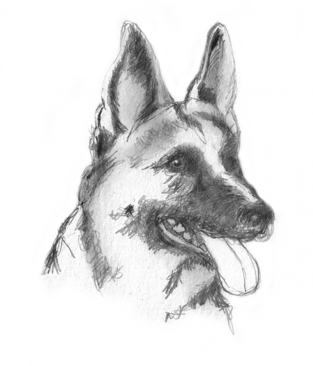 The Most Famous Dog Pencil Sketch Techniques Dog Sketches - Pencil Drawings Of Dogs Image