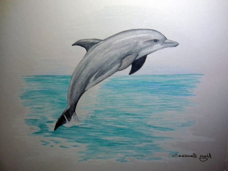 The Most Famous Dolphin Pencil Drawing Ideas Pin By Caroline Adamson On Artworks In 2019 | Dolphin Drawing Images
