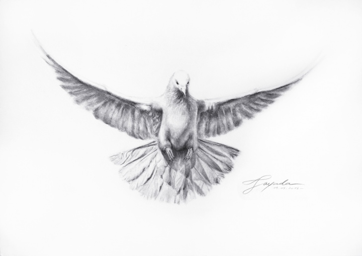 The Most Famous Dove Drawings Pencil Step by Step Dove Sketch At Paintingvalley | Explore Collection Of Dove Sketch Pics