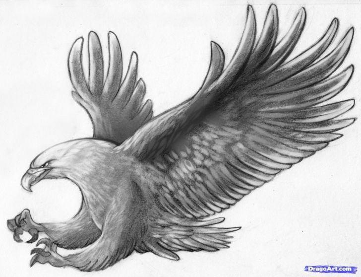 The Most Famous Eagle Pencil Art Simple Flying Eagle Pencil Drawing At Paintingvalley | Explore Images