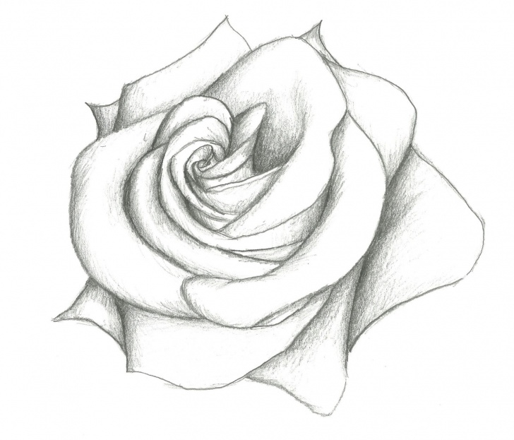 The Most Famous Easy Pencil Shading Drawings Of Flowers Courses Easy Pencil Shading Drawings Flower And Easy Pencil Shading Drawings Picture