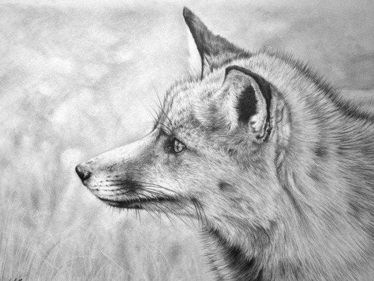 The Most Famous Fox Pencil Drawing Lessons Fox Pencil Drawing At Paintingvalley | Explore Collection Of Fox Images