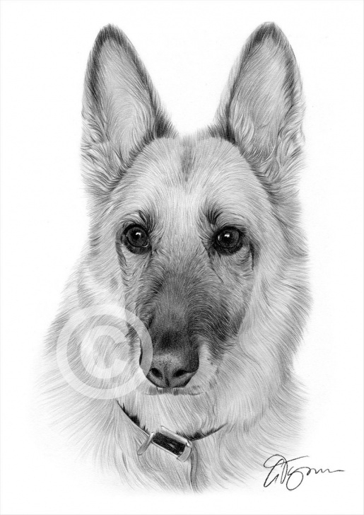 The Most Famous German Shepherd Drawings In Pencil Simple German Shepherd Drawings In Pencil At Paintingvalley | Explore Images