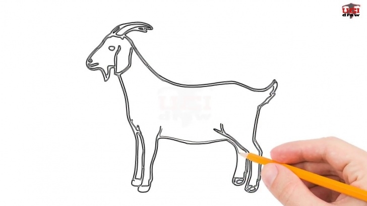 The Most Famous Goat Pencil Drawing Simple How To Draw A Goat Step By Step Easy For Beginners/kids – Simple Goats  Drawing Tutorial Pic