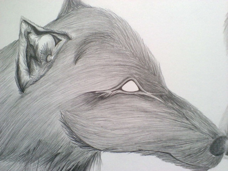 The Most Famous Graphite And Colored Pencil Drawing Tutorial O.o.a.k. Original Graphite And Color Pencil Drawing Dream Wolves From  Nocturnal Designs Pics