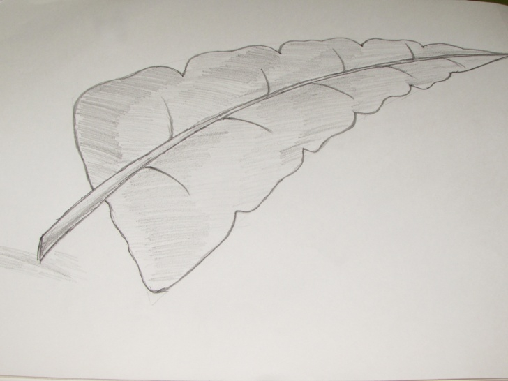 The Most Famous Leaf Drawings In Pencil Techniques How To Draw Or Sketch Of Banana Leaf Using Pencil - Richa Art Club Image