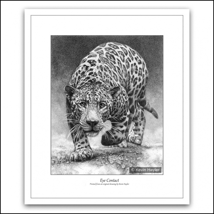 The Most Famous Leopard Pencil Drawing Ideas Eye Contact Pics