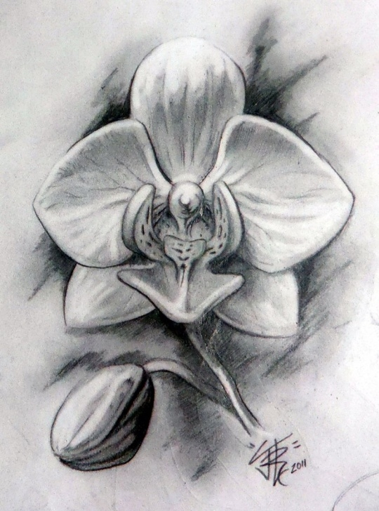 The Most Famous Orchid Pencil Drawing Tutorial Orchid Flower Drawing In Pencil And Orchid Flower Drawing In Pencil Pictures