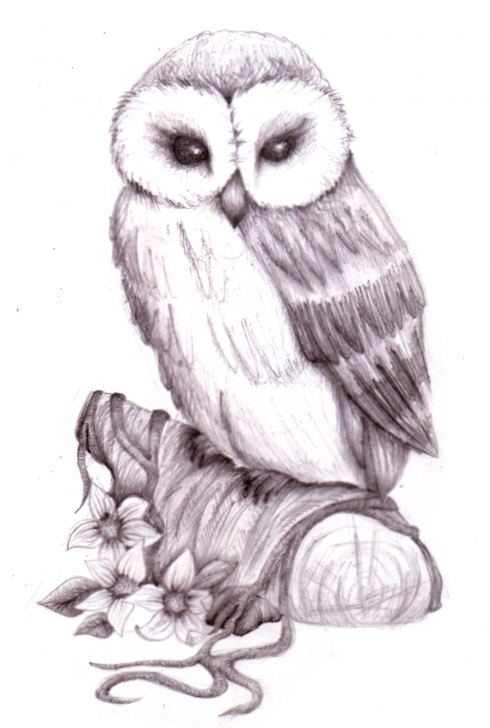 The Most Famous Owl Pencil Drawing Courses Pencil Art Gallery | Pencil Drawings Of Animals Owl Pencil Sketch By Pictures