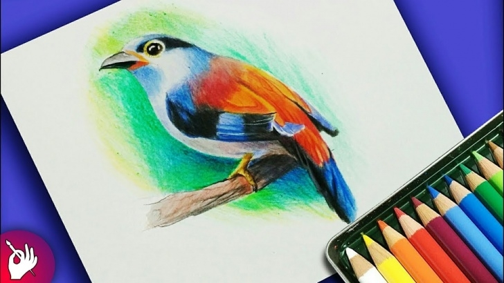 The Most Famous Painting With Pencil Colour Courses How To Draw Bird With Colour Pencil Step By Step Photo