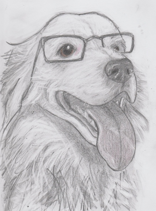 The Most Famous Pencil Drawing Projects Simple Leo The Border Collie, Wearing His Mum's Reading Glasses, Pencil Pics