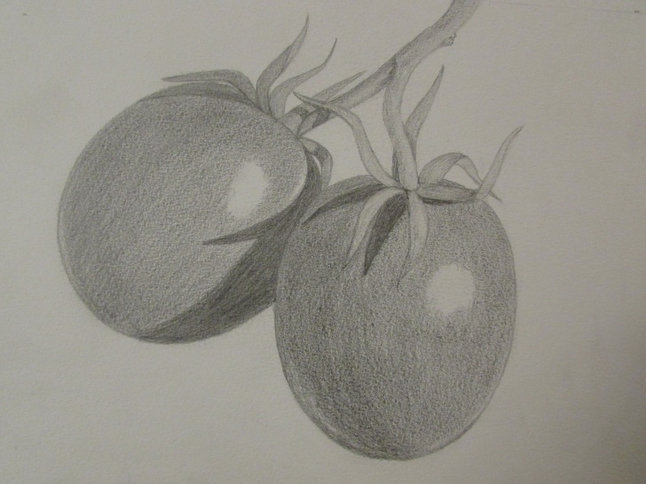 The Most Famous Pencil Shading Of Vegetables Easy Pencil Sketch Of Fruits At Paintingvalley | Explore Collection Pics