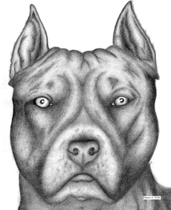 The Most Famous Pitbull Drawings In Pencil Techniques for Beginners Pitbull Passion | I Heart A Bully Smile | Pitbull Drawing Photo
