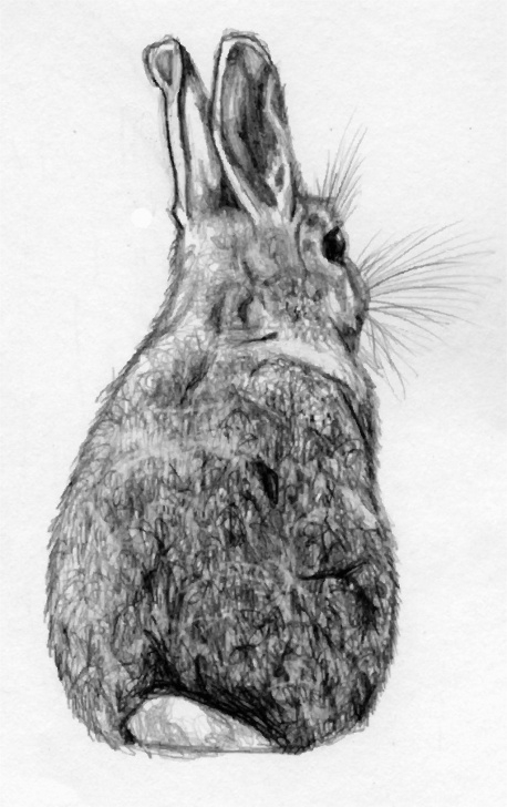The Most Famous Rabbit Sketch In Pencil Courses Rabbit Sketch - Google Search @m.rachel Curry | I Heart This Lots Image