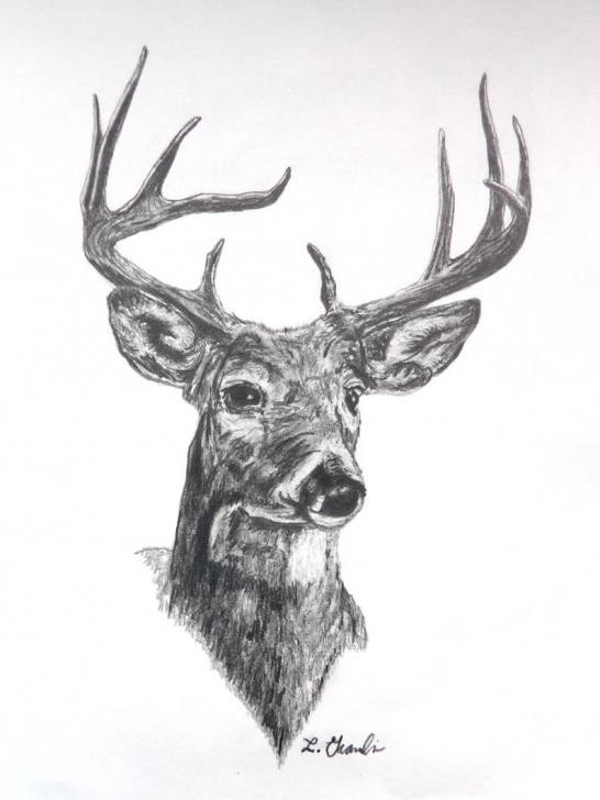 The Most Famous Reindeer Pencil Drawing Free Deer Pencil Drawing Print 8X10 Card Stock. Deer Hunting Drawings. Drawings.  Drawing Print. Pencil Drawing Print. Deer. Gifts For Hunters. Photo