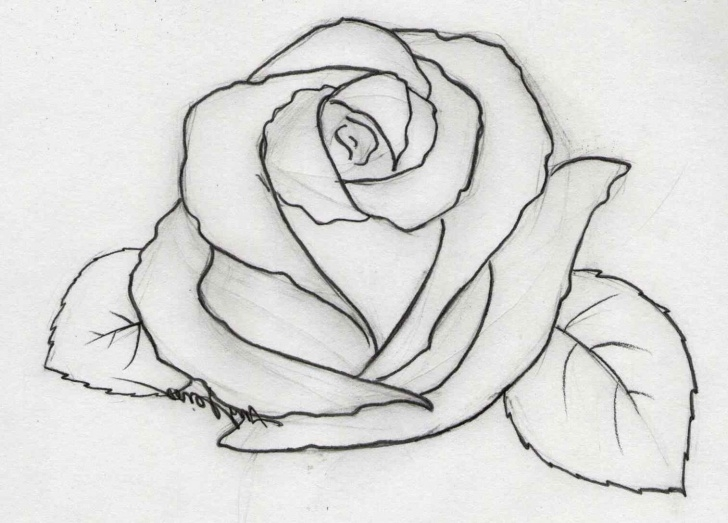 The Most Famous Rose Flower Pencil Sketch Techniques Pencil Drawing Rose Flowers Easy Flower Drawings In Jpg - Cliparting Photo