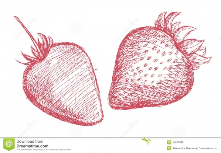The Most Famous Strawberry Pencil Drawing Simple Strawberry Pencil Sketch Stock Vector. Illustration Of Design - 24603878 Picture