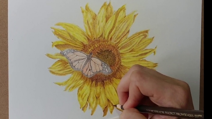 The Most Famous Sunflower Colored Pencil Tutorial Speed Drawing Of Flower (Sunflower) Colored Pencil Timelapse Pictures