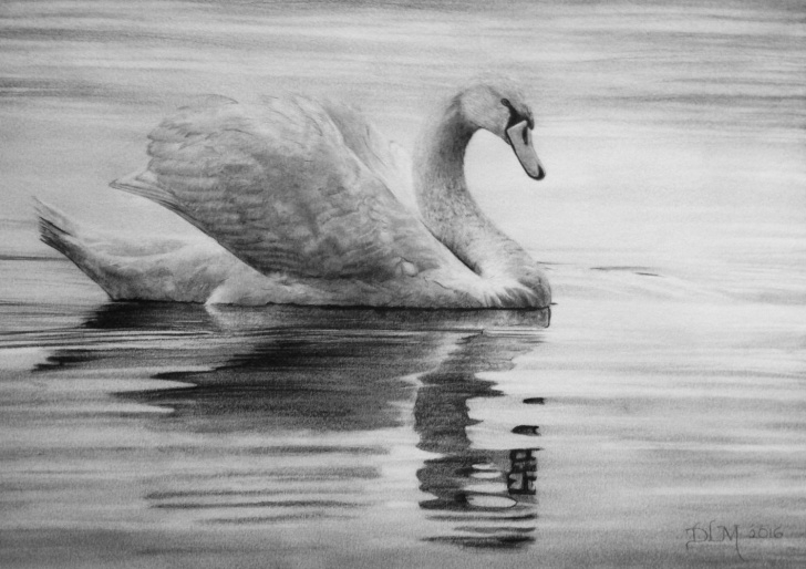 The Most Famous Swan Pencil Drawing Tutorial Swan Drawing In Pencil By Diana Moore - New Zealand Artist | Pencil Image
