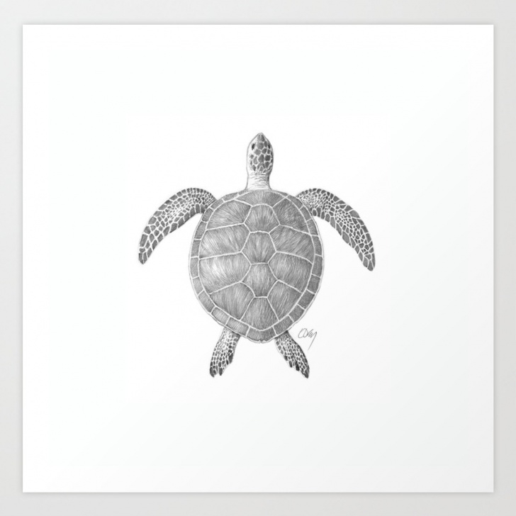 The Most Famous Turtle Pencil Drawing Step by Step Sea Turtle Pencil Drawing Art Print Photos