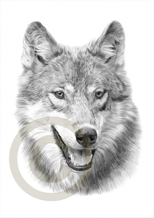 The Most Famous Wolf Pencil Art Simple Grey Wolf Pencil Drawing Print - Wolf Art - Artwork Signed By Artist Gary  Tymon - Ltd Ed 50 Prints - 2 Sizes - Watercolour Pencil Portrait Photos