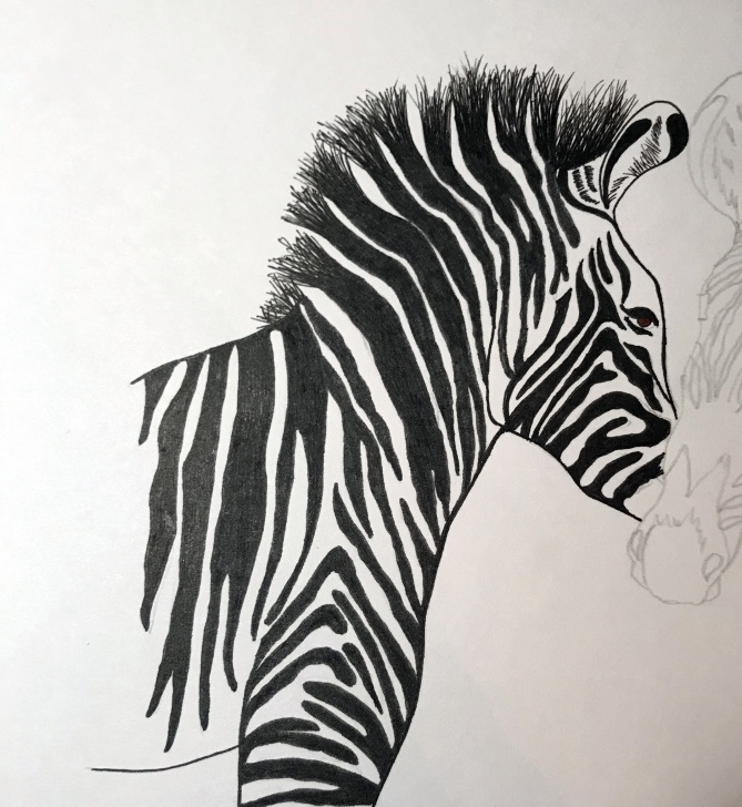 The Most Famous Zebra Pencil Drawing Easy How To Draw A Grevy's Zebra Tutorial Image