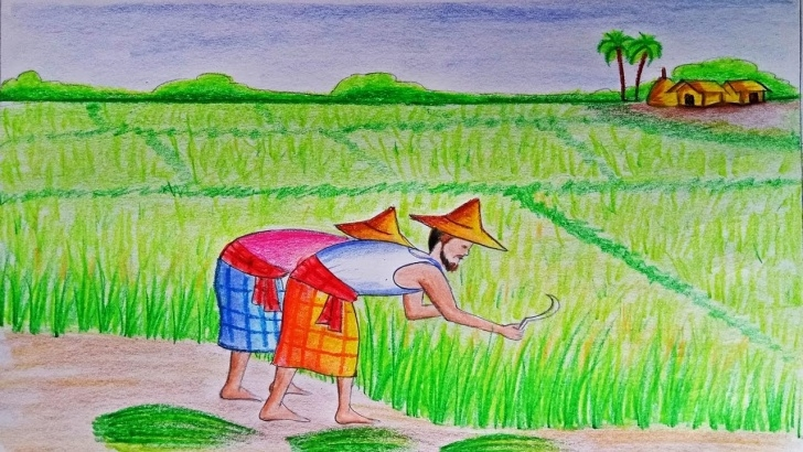 Top Agriculture Pencil Drawing Tutorial How To Draw A Scenery Of Cultivation Step By Step (Very Easy) Images