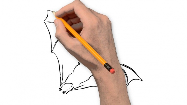 Top Bat Pencil Drawing Easy Bat Animals Pencil To Draw Step By Step Photo