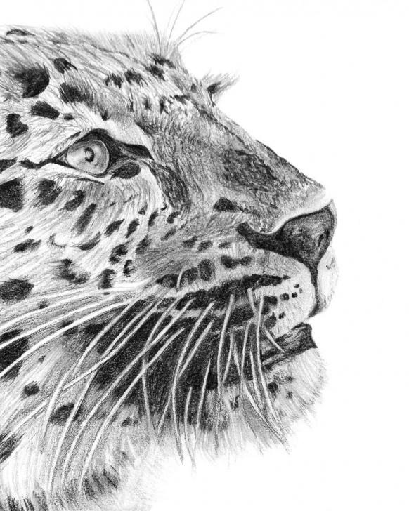 Top Cheetah Pencil Drawing Simple Cheetah Pencil Drawing Print | Cheetah Illustration | Animal Drawing |  Animal Illustration | Digital Print Pic