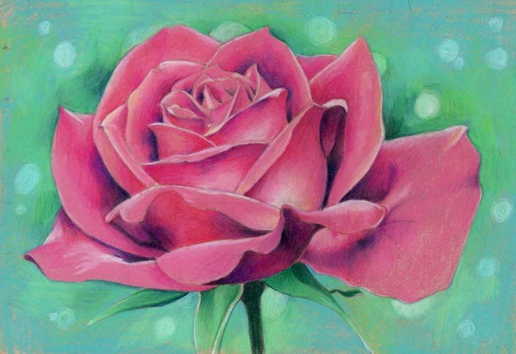 "Top Colored Pencil Rose Courses Rose, Colored Pencil, 8X10"" : Art Pics"