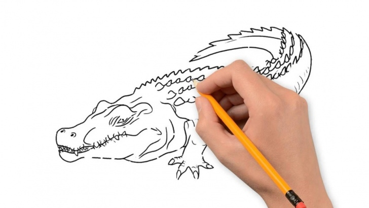 Top Crocodile Pencil Drawing Simple Crocodile Animals Pencil To Draw Step By Step Photos