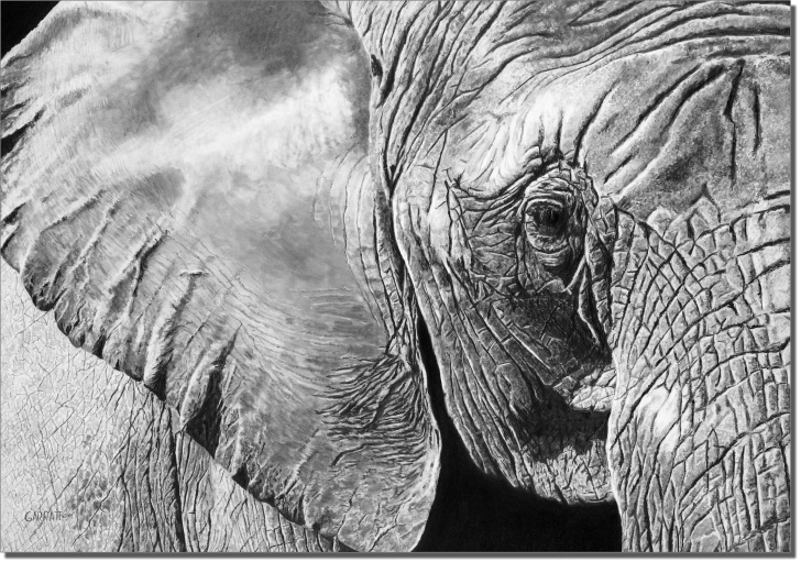 Top Elephant Pencil Art Techniques for Beginners The Matriarch - Elephant Drawing - Owen Garratt - Pencil Artist Pics