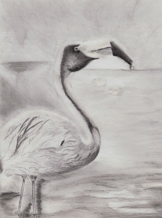 Top Flamingo Pencil Drawing Courses Flamingo Pencil Drawing- Print 11 In X 14 In Image