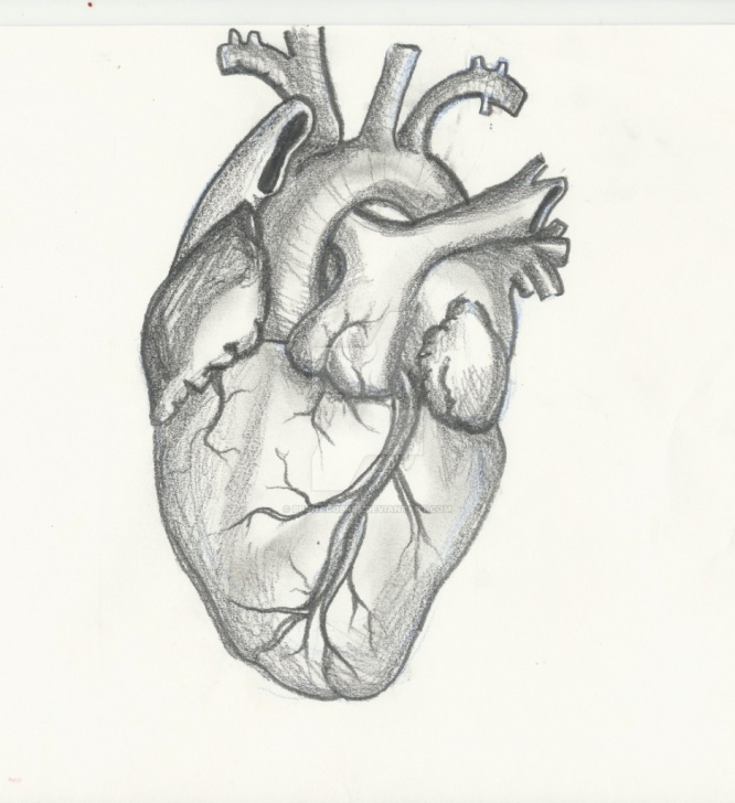 Top Human Heart Pencil Drawing for Beginners Heart Paintings Search Result At Paintingvalley Pic