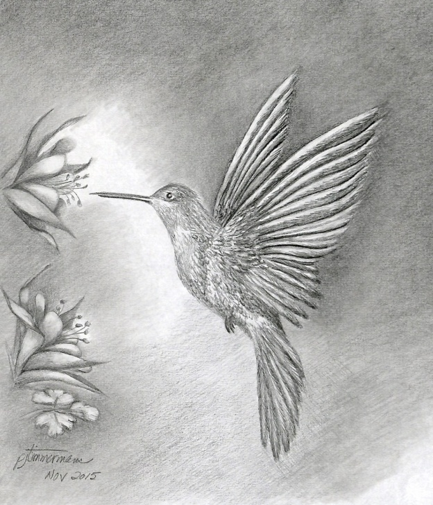 Top Hummingbird Drawings In Pencil Ideas Hummingbird Pencil Sketch At Paintingvalley | Explore Collection Picture