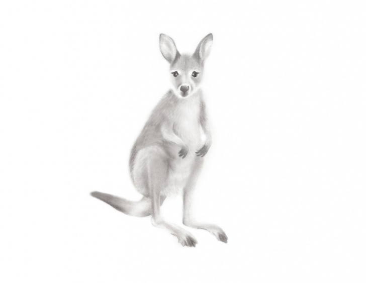 Top Kangaroo Pencil Drawing Tutorial Kangaroo Art, Australian Animal Print, Baby Kangaroo, Pencil Drawing,  Nursery Art, Outback, Zoo Animal, Wallaby, Gender Neutral Baby, Kids Image