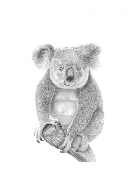 Top Koala Pencil Drawing Courses Koala Pencil Drawing By Mark-Warren On Deviantart Photo