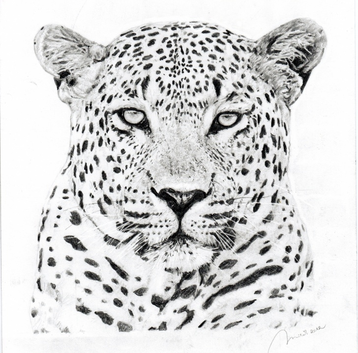 Top Leopard Pencil Drawing Courses Leopard Face Sketch At Paintingvalley | Explore Collection Of Image