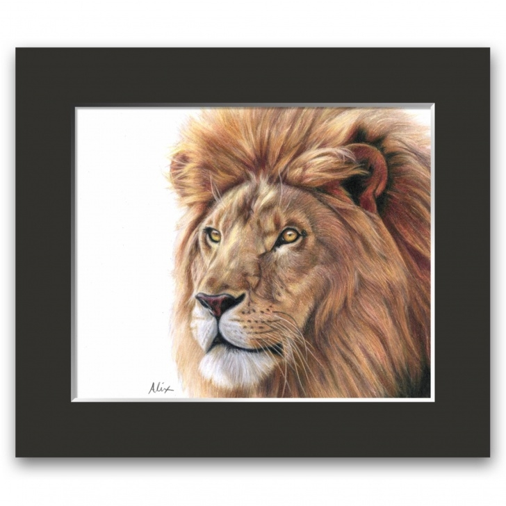 Top Lion Colored Pencil Drawing Simple Original Lion Colored Pencil Drawing Images