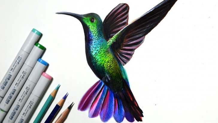 Top Marker And Colored Pencil Drawing Tutorials 'humming Bird' Timelapse Drawing -- Copic Markers And Colored Pencils Image