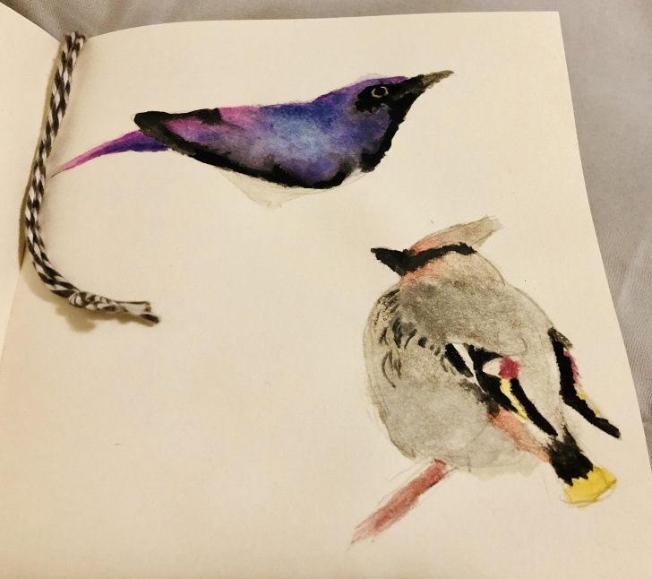 Top Pencil And Watercolor for Beginners 2 Birb, Pencil And Watercolor : Painting Photo