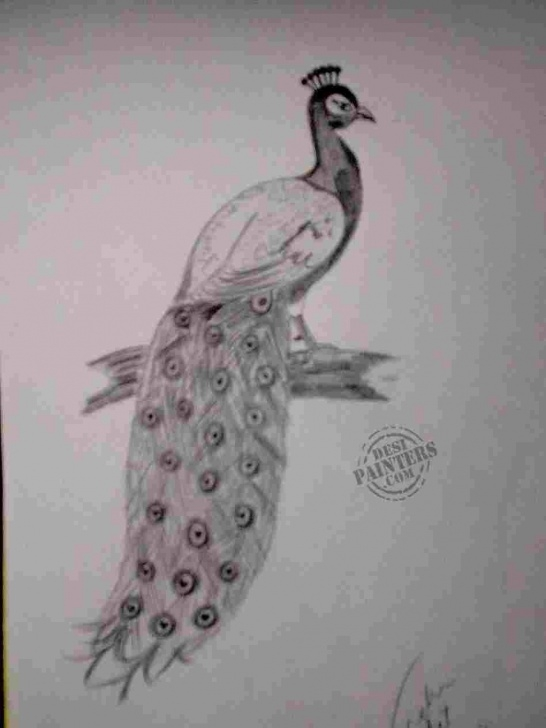 Top Pencil Art Peacock Step by Step Drawing Peacock With Pencil - Draw Pencil Pic