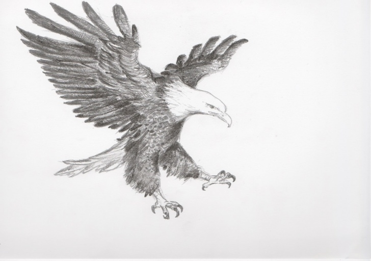 Top Pencil Drawings Of Eagles In Flight Tutorial Eagle Pencil Sketch At Paintingvalley | Explore Collection Of Photos