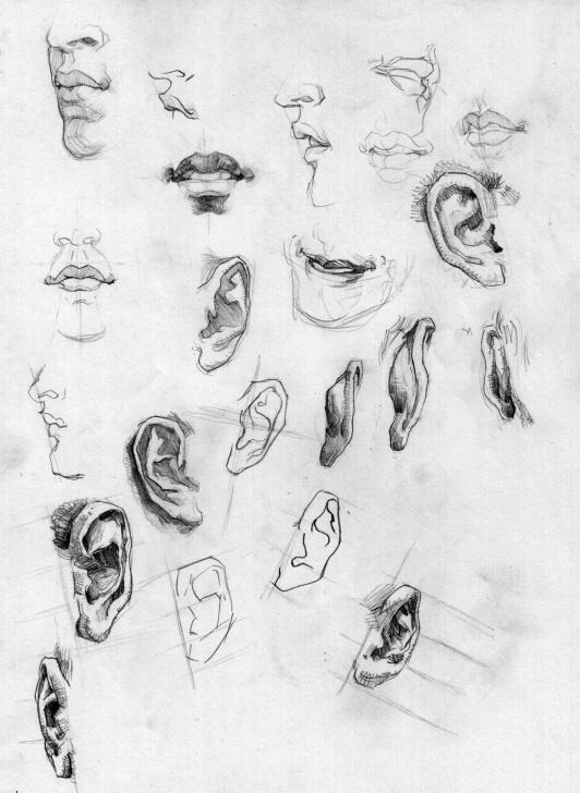 Top Pencil Sketch Of Human Body Parts Techniques for Beginners Sketch Of Human Body Parts At Paintingvalley | Explore Pictures